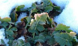 Winter Gardening: Which Vegetables are Best to Grow?