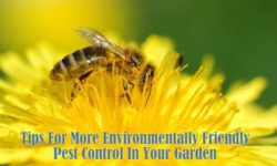 Organic Pest Control – A Natural Approach In Your Garden