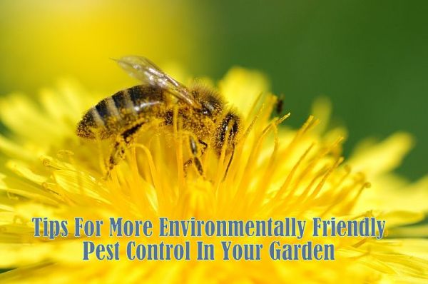 Oganic pest control, the Environmentally Friendly Pest Control Protect Bees