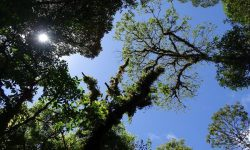 Could the UK Alone Plant Enough Trees to Save the Amazon?