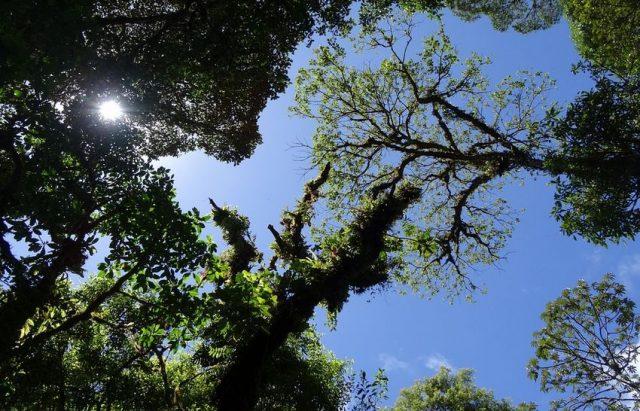 rainforrest view