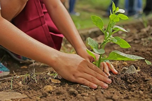 planted seedling to save the Amazon